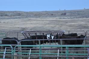 2016-3-10 Wyoming H